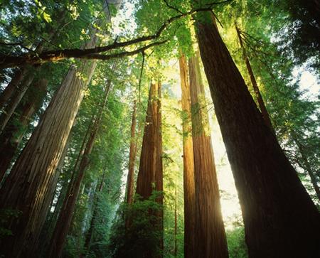 伊田グループ保有の山林
