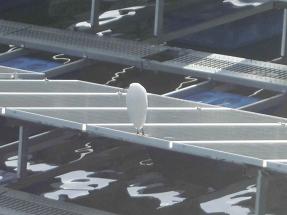 フロート式水上太陽光パネルの上で休憩する鳥